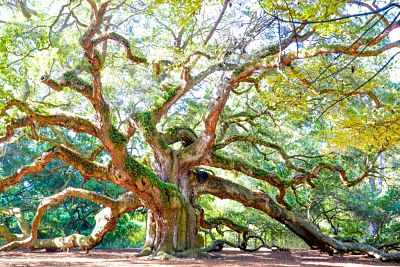 angel-oak-1024x683_opt